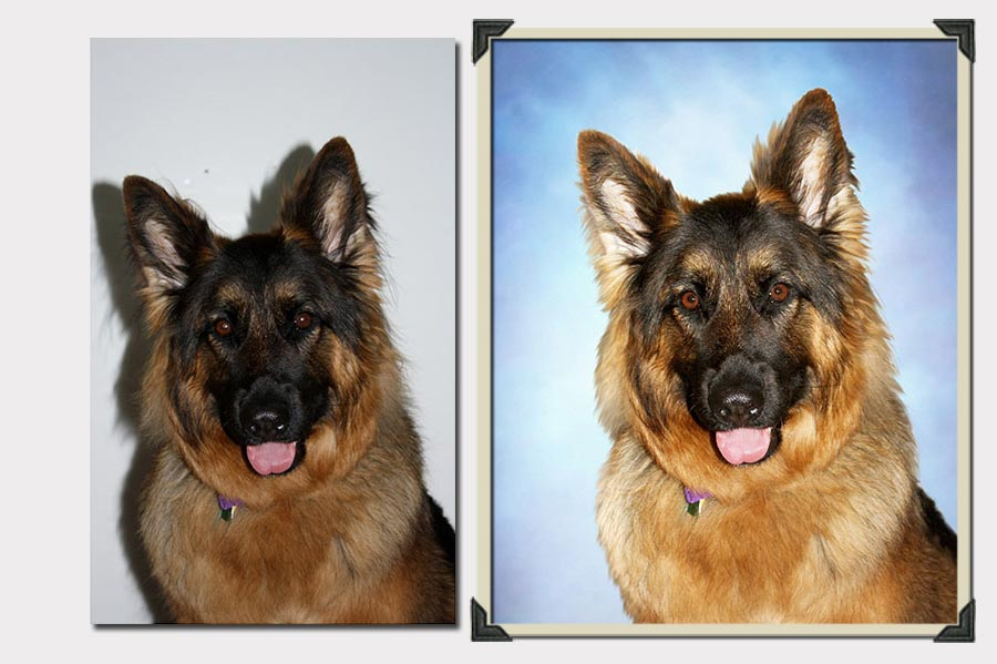 Phojeo Photo Manipulation Change the Background Behind a Dog